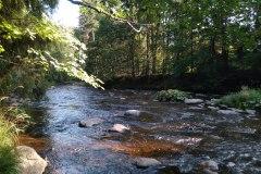 Řeka Divoká Orlice